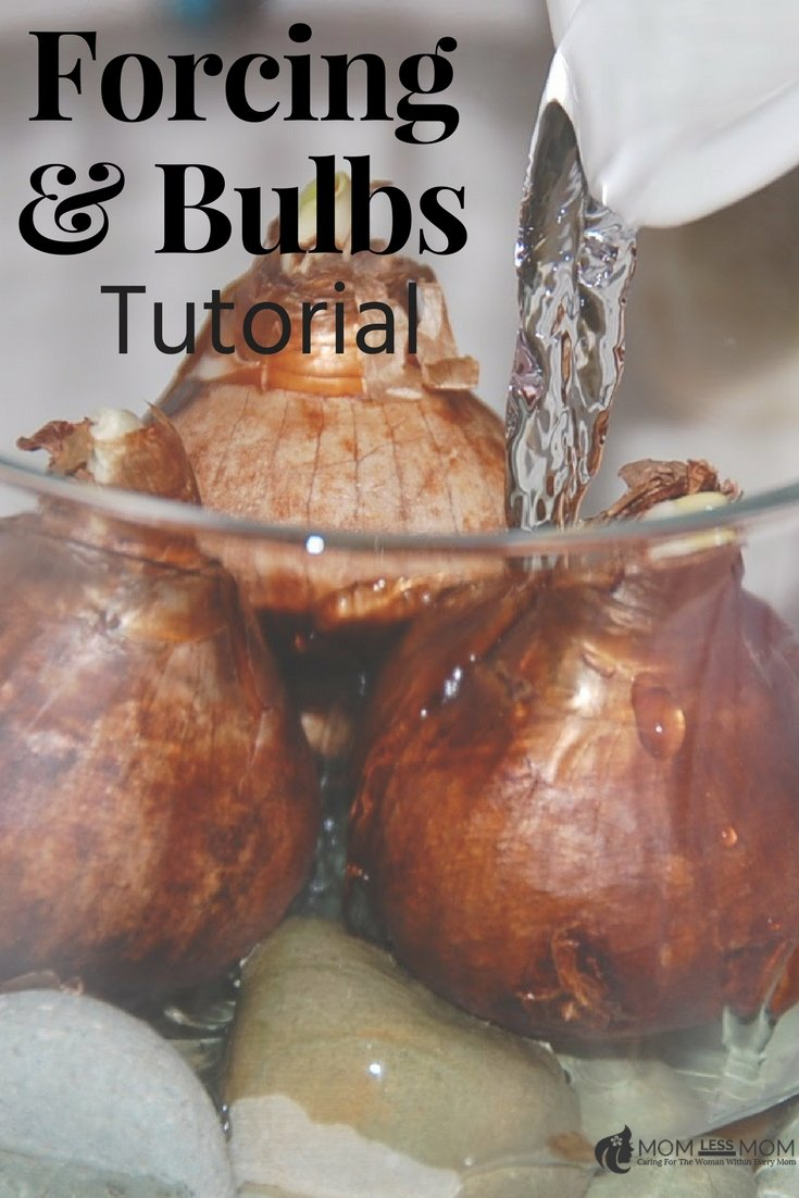 If you are looking for spring activities to do with kids, this forcing bulbs in vases is a great indoor activity to inspire the little curious minds #kidsscienceexperiment