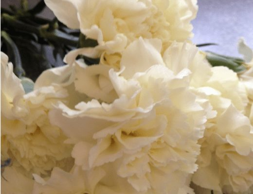 Colorful Carnation Science Project for Kids